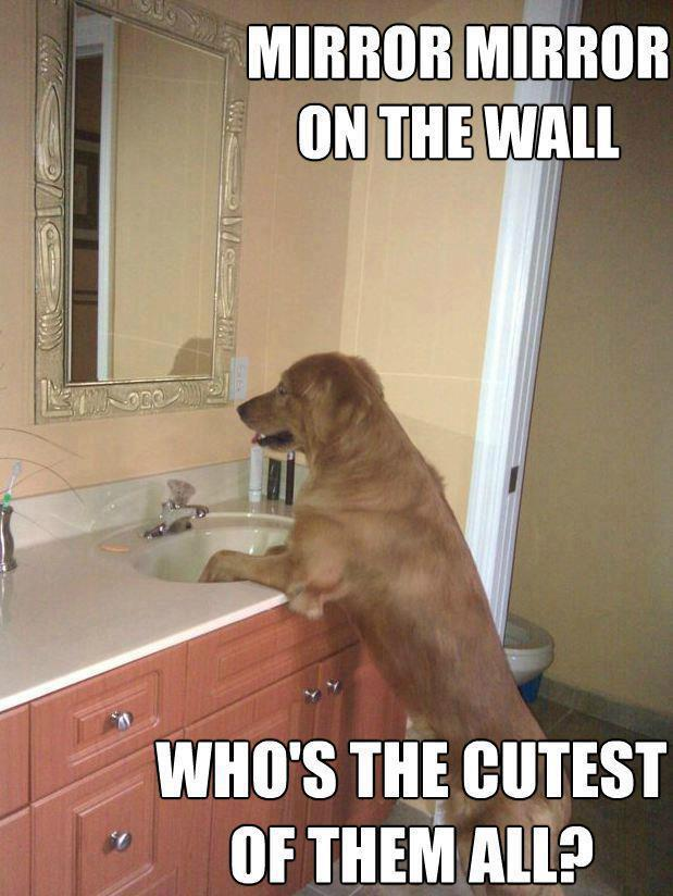 Mirror Mirror On The Wall Funny Quotes