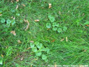weeds in yard